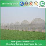 Casa verde de la película plástica de los vehículos/de las flores