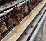 高品質の層のための自動鶏のひよこのケージの家禽装置