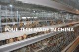 тип цыпленок дня рамки старый & малая система клетки цыпленка для хуторянина цыпленка