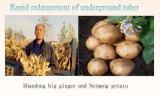 Fertilizzante ricco di sviluppo della radice della pianta del potassio
