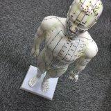Modello maschio di agopuntura per studiare