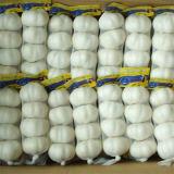 Aglio bianco normale fresco di buona qualità del nuovo raccolto