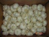Aglio bianco normale fresco di buona qualità del nuovo raccolto dell'esportazione (4.5/5.0)