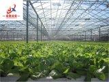 Полноавтоматический парник Contral стеклянный для Vegetable засаживать