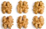Les deux moitiés de grains biologiques chinois noix noix noix communes séchés