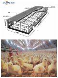 Tettoia della struttura d'acciaio del pollame in memoria due con la strumentazione automatica di alta qualità