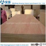 Chapa de madera de alta calidad de madera contrachapada de Comercial para el mercado mundial