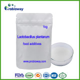 Lactobacillus Plantarum Probiotics Juice Beverage Yogurt Food Additive