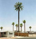 Qualitäts-Typ Kiefer, Palme, Kokosnuss tarnte Baum-Aufsatz