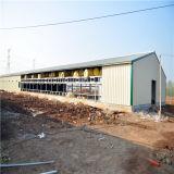 Costruzione prefabbricata della tettoia del pollame della struttura d'acciaio