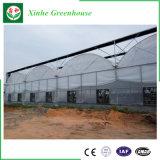 野菜のための現代情報処理機能をもった農業のプラスチックフィルムの温室か花または庭
