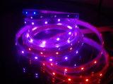 세륨 EMC LVD RoHS 보장 2 년, LED 디지털 풀 컬러 IC RGB 지구 빛, 색깔 변화 빛