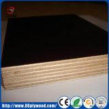 Переклейка более дешевого тополя строительного материала конструкции соединенная соединением Shuttering