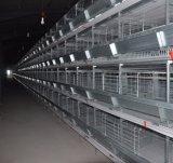 Os fabricantes de alimentos para aves de capoeira H tipo gaiola de frango da camada de Equipamento Agrícola