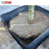 [هدب] [جوممبرن] شجرة خيزرانيّ جذر عائق
