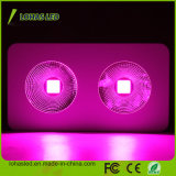 عرنوس الذرة [لد] معمل ضوء [300و] [450و] [600و] [800و] [900و] [1000و] [1200و] عرنوس الذرة يشبع طيف [هدروبونيك] [لد] ينمو معمل ضوء