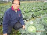 葉状に野菜に植わることのためのUnigrowの土肥料