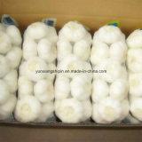 Новую Культуру белый чеснок, свежего чеснока