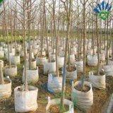 Il Nonwoven biodegradabile poco costoso coltiva il sacchetto, prodotto non intessuto per la verdura, il semenzale, pianta coltiva il sacchetto
