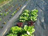 農業および庭のためのWeedのマット