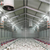 Diseño de la casa de la capa del pollo para la avicultura con el equipo