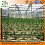 건장하고 강한 다중 경간 Polycarbonate/PC 장 또는 널 농업 온실