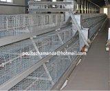 Sistema de la jaula del pollo de la parrilla/de la carne para la granja avícola (un tipo marco)