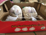 중국 White Garlic 10kg 20kg Mesh Bag