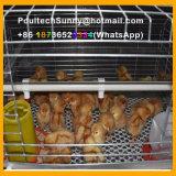 Systèmes verticaux de cage de batterie de poulette de matériel d'aviculture