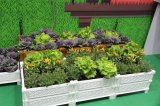 Potenciômetro Stackable do jardim vegetal com a base levantada plantador do jardim da flor