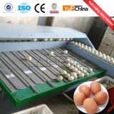 Automatischer Ei-Sortierer mit niedrigem Preis
