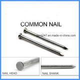 1''- 6'' de tête de tige lisse poli à Damiers communs fer commune d'ongles nail à Guangzhou