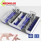 L'élevage porcin de l'équipement Caisse farrowing
