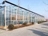 Agricoltura/multi serra dello strato del policarbonato Sheet/PC portata di Commerical per le verdure