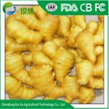 Le gingembre à sec avec de bons prix et de qualité