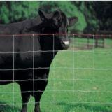 熱い販売の高く抗張電流を通された牛網の塀かファイルされた塀