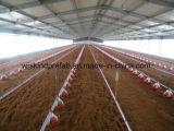 Casa de pollo de las aves de corral de la estructura de acero con buen precio