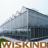 China galvanizado en caliente de bajo costo solo Span Plástico invernadero