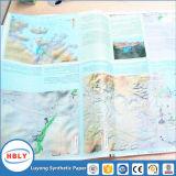 Papel de pedra dos mapas