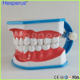 Modelo da escovadela de dentes com o estudante do dentista das crianças da lingüeta que aprende o modelo