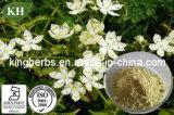 Swertiamarin naturel 18%-98% Extrait de la HPLC Swertia