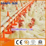 Élevage de poulets avec hangar de l'équipement et de contrôle automatique