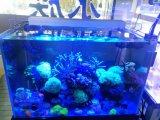 Espectro de luz azul y blanco regulable Acuario Marino LED 72W