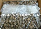 칼라 박스를 가진 다양한 백색 꽃 버섯