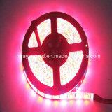 Striscia di colore rosso 5050 LED di illuminazione 520-530nm del LED