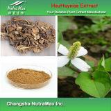 Extrait naturel de Cordata de Houttuynia de 100% (4 : 1~20 : 1 par la chromatographie sur couche mince)