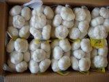 Reiner weißer Knoblauch 2017 mit Karton-Verpackung