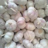 Prezzo all'ingrosso per aglio bianco fresco cinese