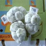 ثوم [شنس] طازج بيضاء (عاديّة بيضاء وأبيض صادّة)