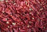 Boa qualidade de exportação chinês fresca pimento vermelho